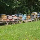 Arrêté préfectoral sur les ruches