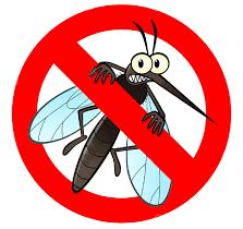 Moustique tigre: résultat négatif suite au diagnostic entomologique